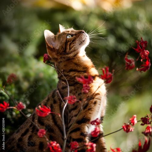 Kot bengalski na drzewie