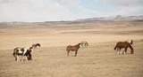 Wild horses in Patagonia Chile Argentina  - 233040201