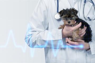 Veterinary.