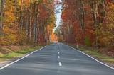 Afaltowa droga przez jesienny las. - 233044886