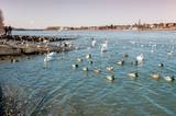 Wasservögel  am See - 233055480