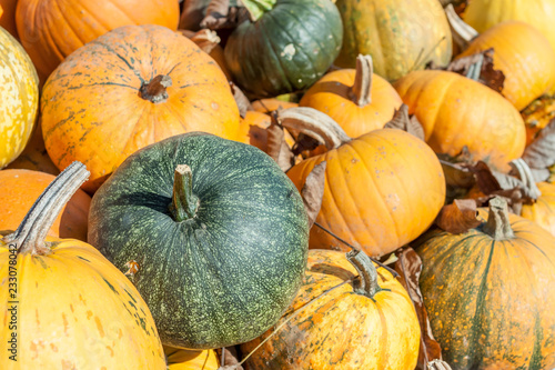 pile of diferent pumpkins in farm garden