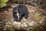 A Bear With A Salmon Carcass - 233082820