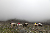 Porter and horses climbing to 4200 meters camp in Mount Agri (Ararat), Dogubeyazit, Turkey. Mount Agri is the highest mountain in Turkey at 5165 meters and it is believed that Noah Ark is there.