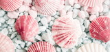 Sea shells, natural pink and blue stones as  background. Marine texture. Relax concept. Flat lay, top view  - 233143203