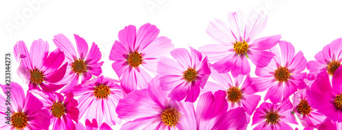a beautiful floral background from flower petals - 233144273