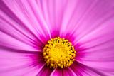 Pink Flower Macro Background - 233147235