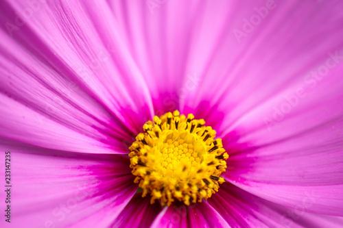 Różowy kwiat makro tło