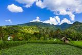 Fields on Bali island Indonesia - 233151891