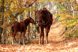 Horse with foal in the autumn forest - 233165065
