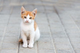 little kitty sitting on a pavement looking ahead - 233185041