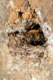 macro shot of a bee leaving the home. - 233188434