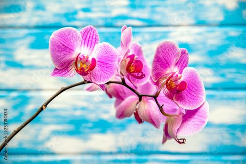 Gałąź purpurowe orchidee na błękitnym drewnianym tle