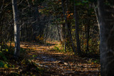 Autumn in forest - mysterious alley. - 233204485