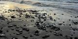 Steine am Strand der Ostsee - 233233256