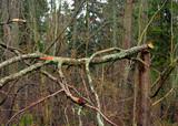 Broken large tree branch.