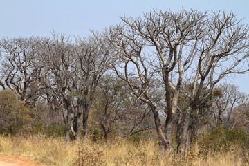 Wald und Savanne im Südlichen Afrika