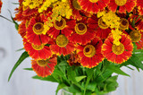 Bouquet of red and yellow flowers. Beautiful combination of colors. Mimosa. Bouquet of wild flowers. - 233255030