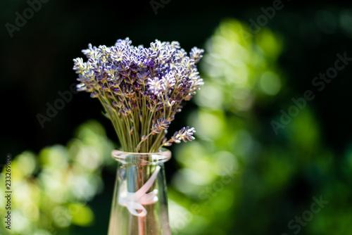 Sticker lavender garder