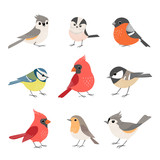 Collection of cute winter birds - 233289201