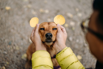 dog with aspen leaf ears