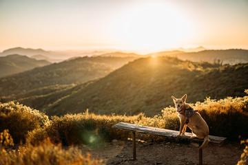 dog on bench at sunset