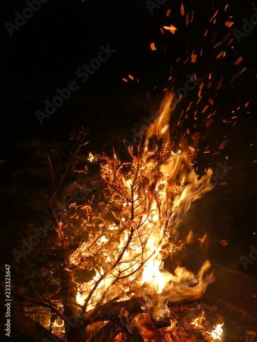 Offenes Feuer mit brennendem Tannenbaum - 233323647
