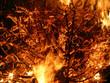 Offenes Feuer mit brennendem Tannenbaum - 233324808