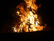 Offenes Feuer mit brennendem Tannenbaum - 233326689