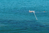 Winch over the sea for wakeboarding. Seagull on the winch. - 233329210