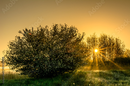 Foto Murales Beautiful nature scenery with sun shining through trees, spring landscape during sunset with orange sky