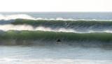 surfeur - 233339677