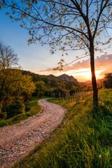 Sentiero di collina con le calde luci del tramonto sui Colli Euganei in Italia © ginoprio