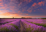 Fototapeta Kwiaty - Lavender field at dawn © denis_333