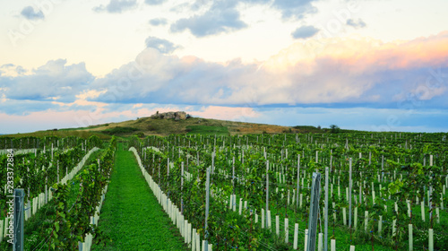 Wall mural Vineyard at sunset with dramatic clouds
