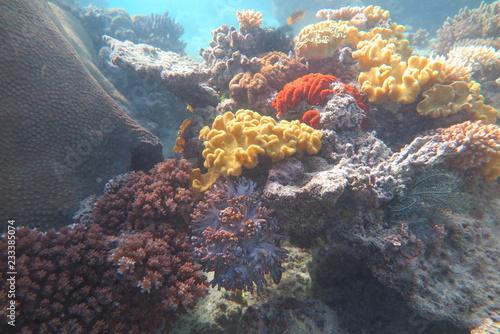 Foto Murales Fiji