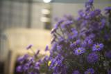 Fioletowe kwiaty - 233416461