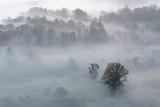 Panorama sulla foresta nebbiosa, Italia - 233416811