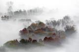 Panorama sulla foresta nebbiosa, Italia - 233417033