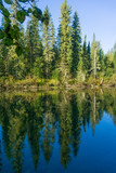 High trees over still water - 233420608