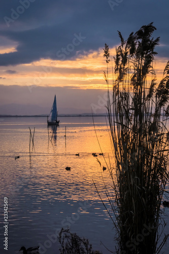 Yacht sailing at sunset with reeds