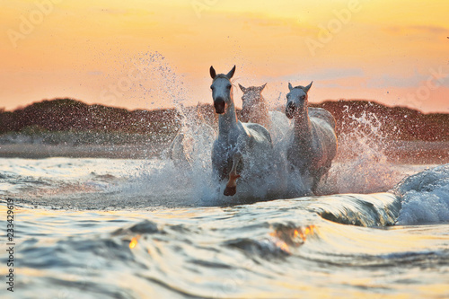 Running horses in water