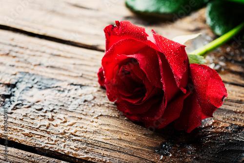 Foto Murales Amazing red rose
