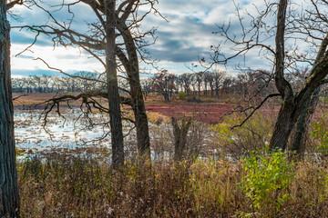 Mixed Habitat In Fall