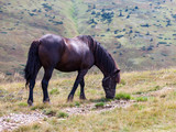 Brown horse in the mountains - 233458828