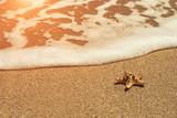 starfish on sea sandy beach at sunset. - 233464252