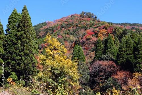 高千穂町 秋の山林風景