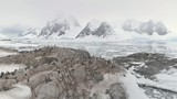 Penguins Colony Standing On Antarctica Mountain. Aerial Flight Over Polar Surface. Snow Covered Mountains Surrounded By The Frozen Ice Ocean Water. Behavior Of Wild Animals. Winter Scene. 4k Footage. - 233486227