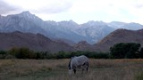 Static shot of a white horse, eating grass, with Mt Whitney in the background, in Sierra Nevada mountains, California, in USA - 233486433