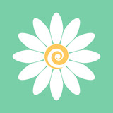 Chamomile. Flower. Isolated graphic element. Vector graphics.